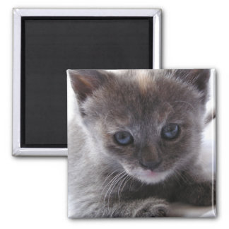 Dilute Tortoiseshell 2 Inch Square Magnet
