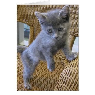 Dilute Tortoiseshell Kitten Card