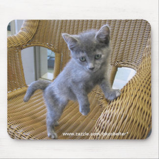 Dilute Tortoiseshell Kitten Mouse Pad