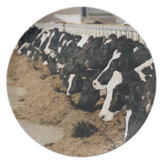 Diminishing Perspective of Cow's Heads Grazing Plate