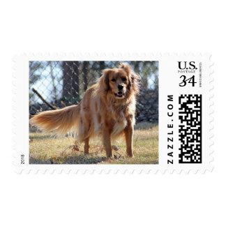 Dinah Postcard stamp