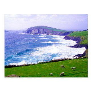 Dingle Ireland Postcard