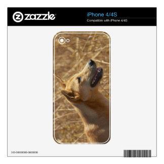 Dingo (Canis lupus dingo) Decals For iPhone 4