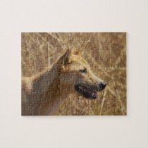 Dingo (Canis lupus dingo) Jigsaw Puzzle