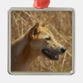 Dingo (Canis lupus dingo) Metal Ornament