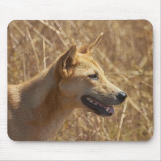 Dingo (Canis lupus dingo) Mouse Pad