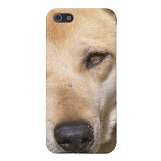 Dingo Cover For iPhone SE/5/5s