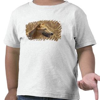 Dingo (dingo del lupus de Canis) Camisetas
