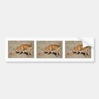 Dingo eating poultry bumper sticker