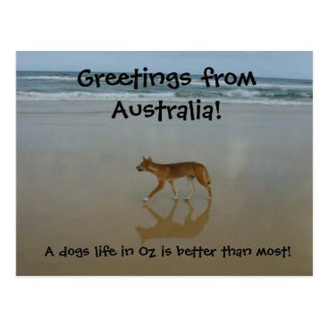 Beach Themed Dingo postcard