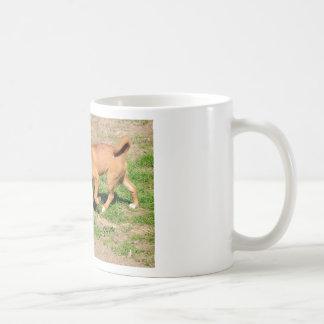 Dingo walking the mouth open coffee mug