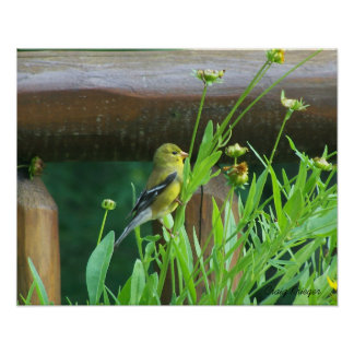 Dining Goldfinch Poster
