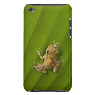 Dink frog (Eleutherodactylus diastema) on a leaf Barely There iPod Cover