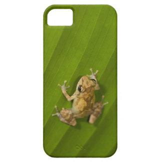 Dink frog (Eleutherodactylus diastema) on a leaf iPhone 5 Case