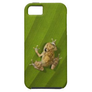 Dink frog (Eleutherodactylus diastema) on a leaf iPhone 5 Cover