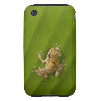Dink frog (Eleutherodactylus diastema) on a leaf Tough iPhone 3 Cases
