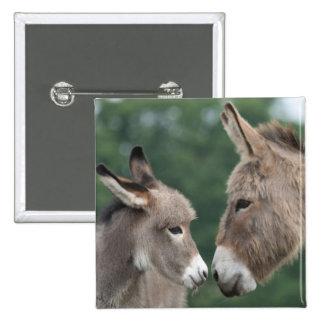 Dinky donkey button