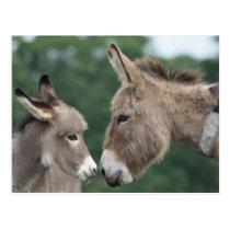 Dinky donkey postcard