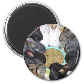 Dinner Time! 2 Inch Round Magnet