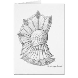 Dinoflagellate Card