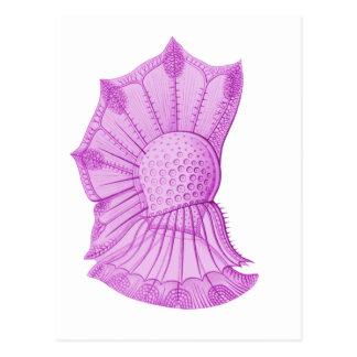 Dinoflagellate Postcard