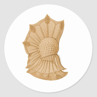 Dinoflagellate Sticker