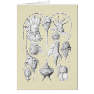 Dinoflagellates Card