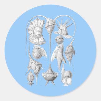 Dinoflagellates Classic Round Sticker