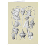 Dinoflagellates Greeting Cards