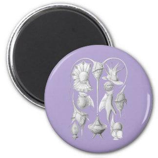 Dinoflagellates 2 Inch Round Magnet