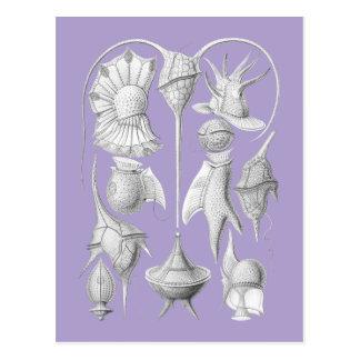 Dinoflagellates Postcard