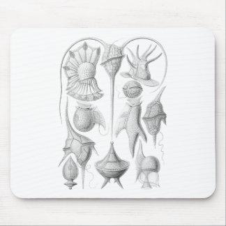 Dinoflagellates Tapete De Ratones