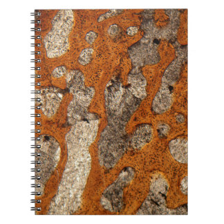 Dinosaur bone under the microscope note books