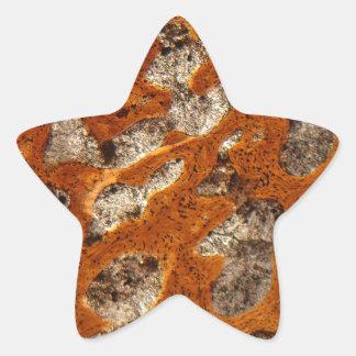 Dinosaur bone under the microscope star sticker