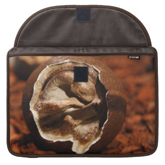 Dinosaur egg with embryo sleeve for MacBook pro