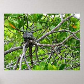 Dinosaur in the Mangroves Poster