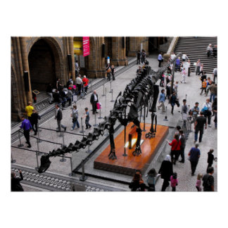 Dinosaur in the Natural History museum Poster