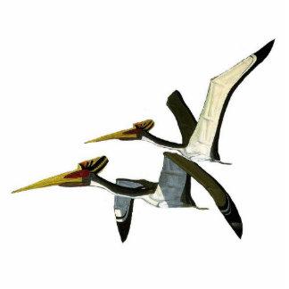 Dinosaur Photo Sculpture Pterosaurs Gregory Paul