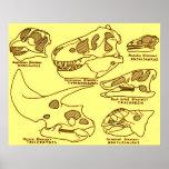 Dinosaur Skulls Print