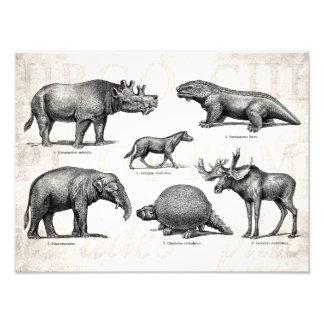 Dinosaurios retros del viejo ejemplo del fotografía