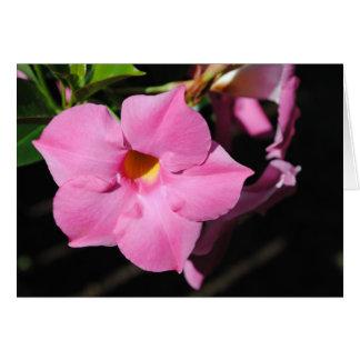 Dipldenia rosado tarjeta pequeña