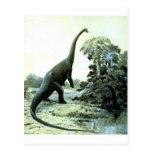 diplodocus-1 post card