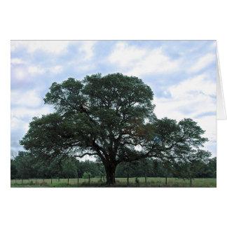 """""""Diricia's Tree"""" photograph by Sean Allan Krill Card"""