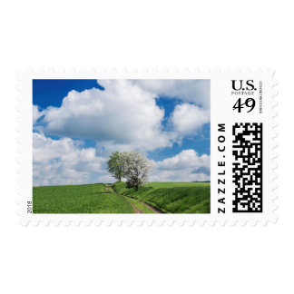 Dirt Road and Apple Trees Stamp