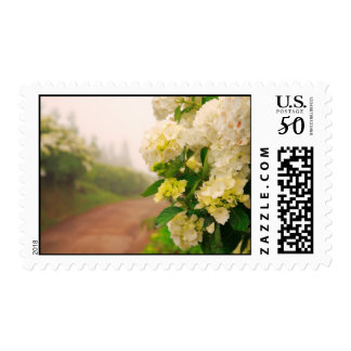 Dirt road and hydrangeas postage