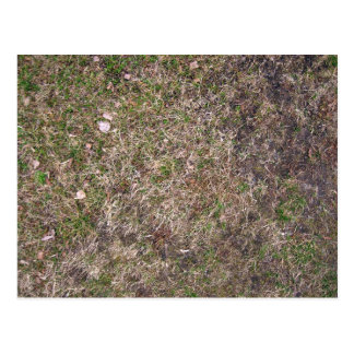 Dirty Brown Dry Grass Texture Postcard