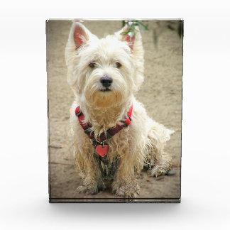 DIRTY DOG AWARD