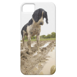 Dirty dog looking at tennis ball in mud iPhone SE/5/5s case