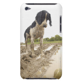 Dirty dog looking at tennis ball in mud iPod Case-Mate case