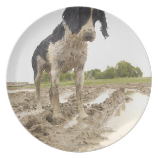Dirty dog looking at tennis ball in mud melamine plate